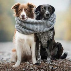 Размеры шарфов, снудов, вязание спицами